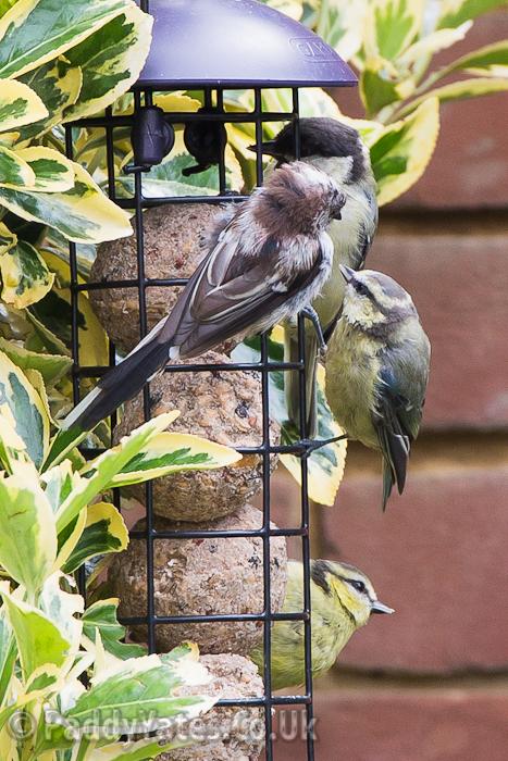 garden-birds-51