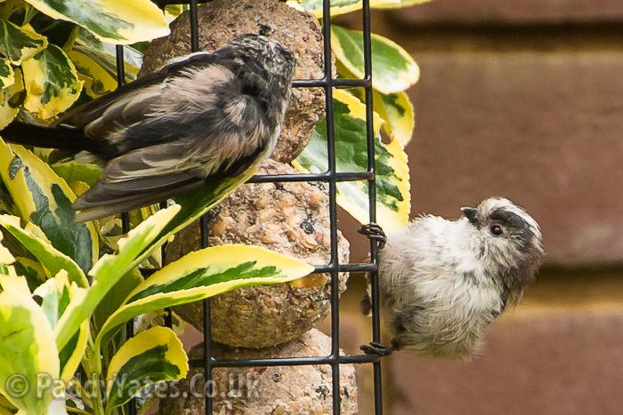 garden-birds-61