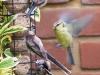 garden-birds-41
