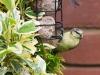 garden-birds-71